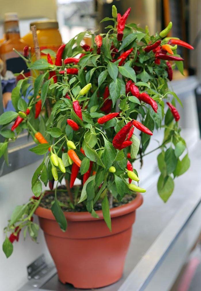 15 légumes qui poussent bien dans des pots