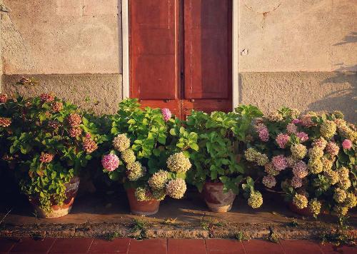 Plantes en pot : les conseils pour réussir
