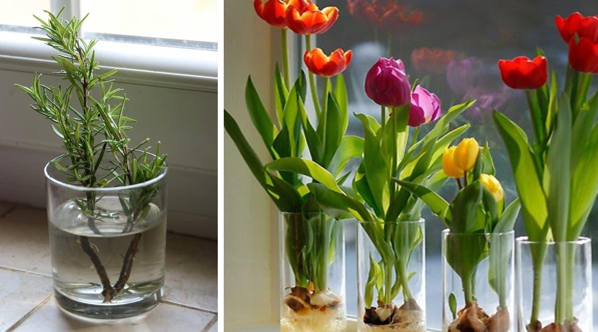 10 fleurs et plantes que vous pouvez facilement cultiver dans un verre d'eau pour que votre maison sente toujours bon