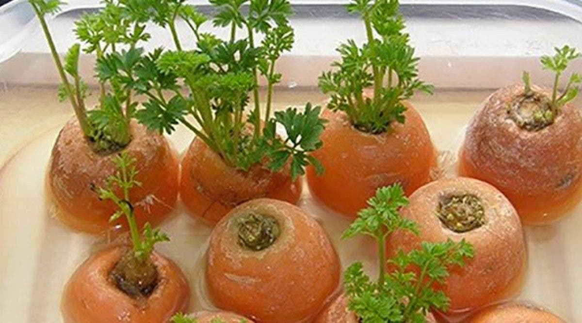 6 Légumes et herbes que vous pouvez cultiver à l'intérieur de la maison et à partir de déchets
