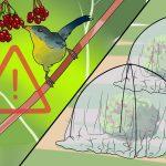 5 choses à savoir sur l'alimentation des oiseaux sauvages dans votre jardin