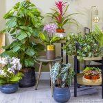 Les 3 meilleures plantes d'intérieur pour certaines pièces de la maison