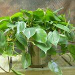 Voici les plantes d'intérieur qui peuvent survivre dans le coin le plus sombre