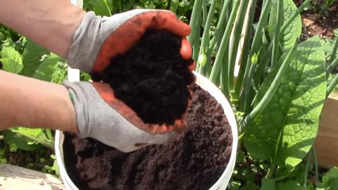 Le marc de café permet de se débarrasser des insectes, fertiliser les pelouses et effectuer d'autres tâches ménagères !