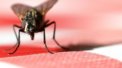 7 astuces de génie pour se débarrasser des mouches et les éloigner