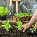 Comment construire un parterre surélevé pour le jardinage