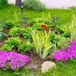 Créer un massif de fleurs magnifique en 6 étapes