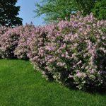 Trouvez les bons types d'arbustes pour votre jardin